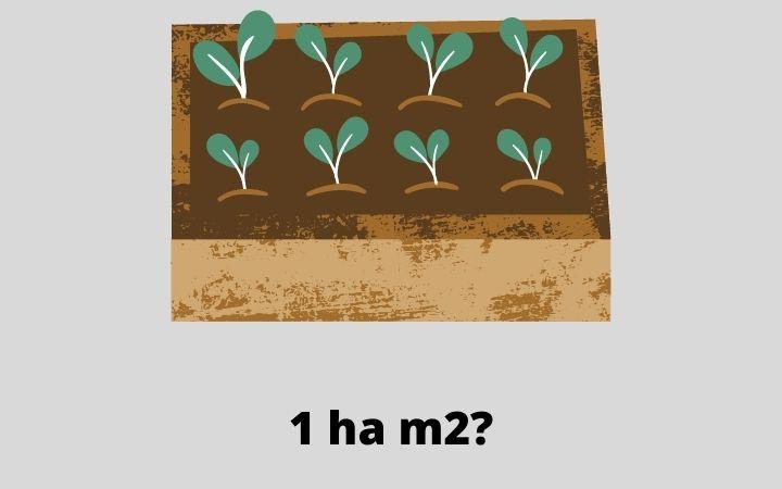 1 ha m2